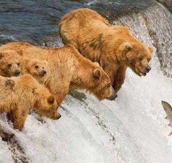 زندگی حیوانات قطبی
