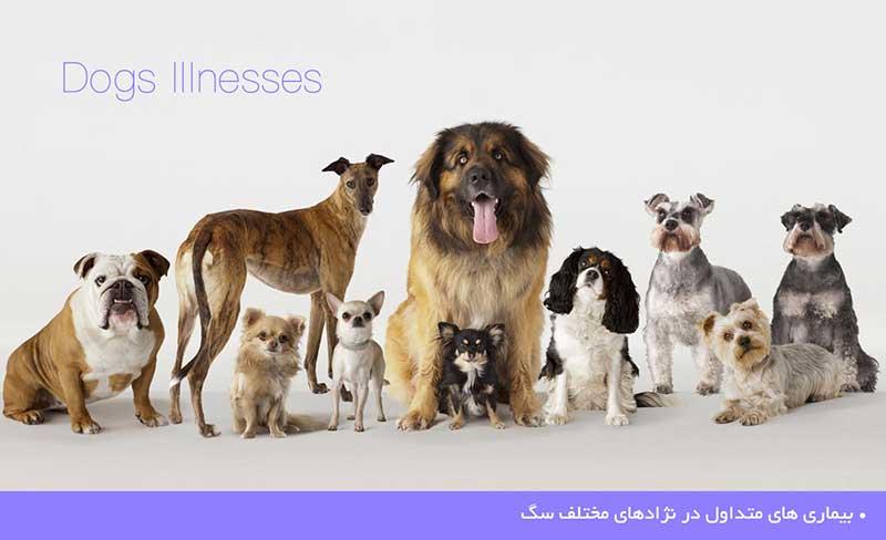 بیماری های متداول در نژادهای مختلف سگ