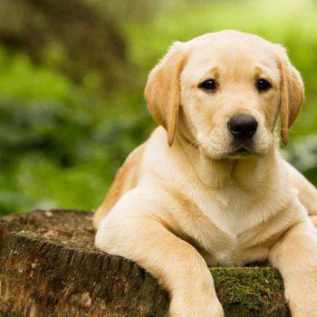 بیماری های حیوانات خانگی
